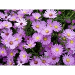 ASTER – ASTER